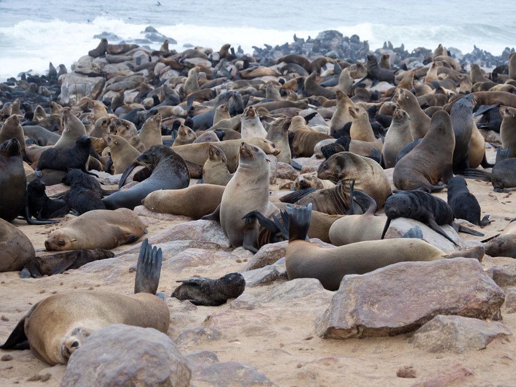 Palmwag/Damaraland – Swakopmund: Stopp bei der Robbenkolonie von Cape Cross, Stadtrundgang in Swakopmund