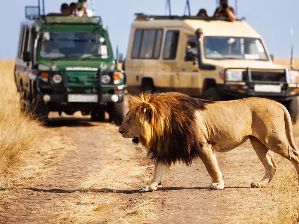 Tag 4 – Loita Hills – Masai Mara-Nationalreservat : erste Pirschfahrt in der Masai Mara