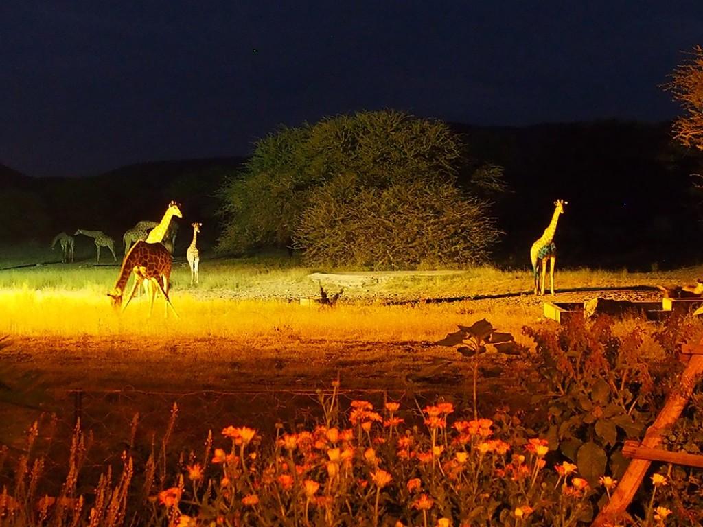 Gabus Game Ranch *** bei Otavi
