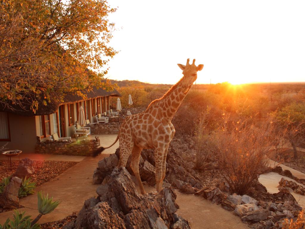 Okutala Etosha Lodge *** am Etosha-Nationalpark