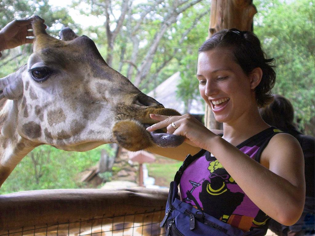 Nairobi : Ankunft am Morgen, Frühstück, Besuch des Elefantenwaisenhauses des David Sheldrick Wildlife Trust, Besuch im Giraffe Center, nachmittags Freizeit