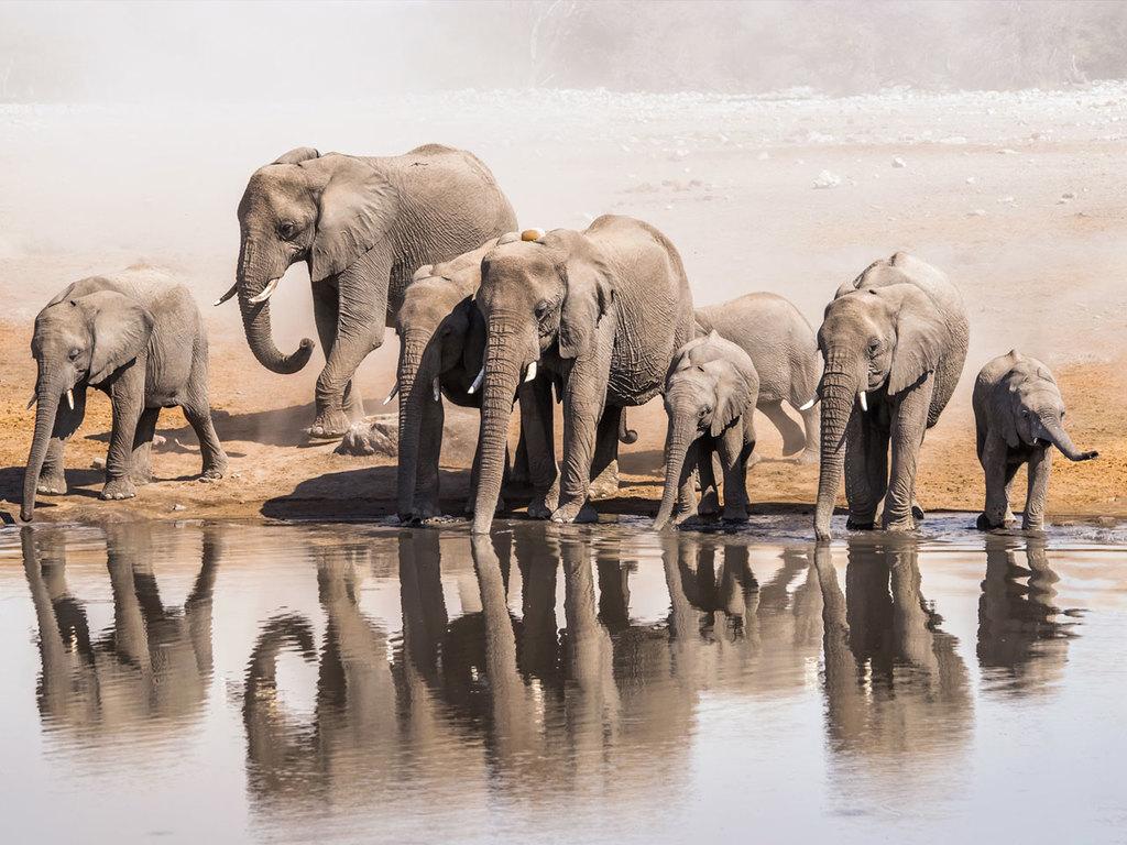 Nata : vormittags Pirschwanderung, am Nachmittag Pirschfahrt im offenen Safarifahrzeug