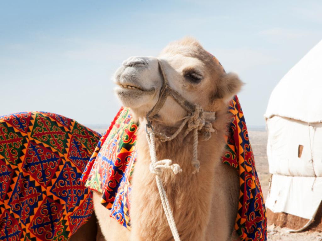 Tagesfahrt nach Buchara: Tagesfahrt durch die Wüste