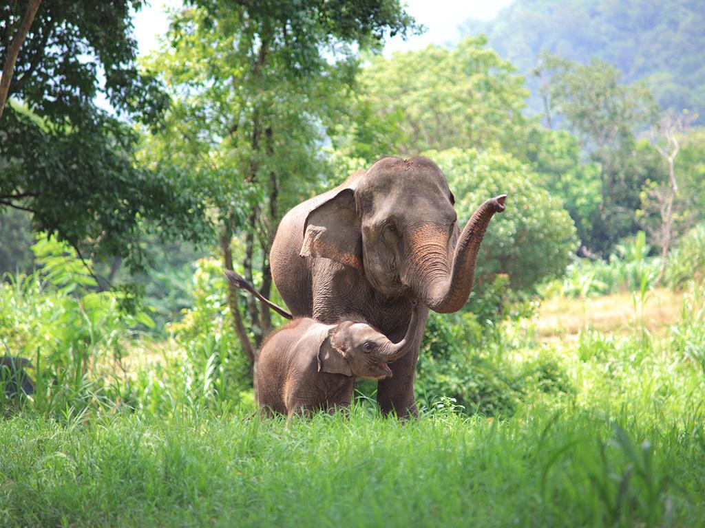 Phrae: Besuch des Thai Seri Museums und eines Handwerkerbetriebs, Wanderung im Phrae Muang Phi Forest-Park, Stadtbesichtigung in Phrae