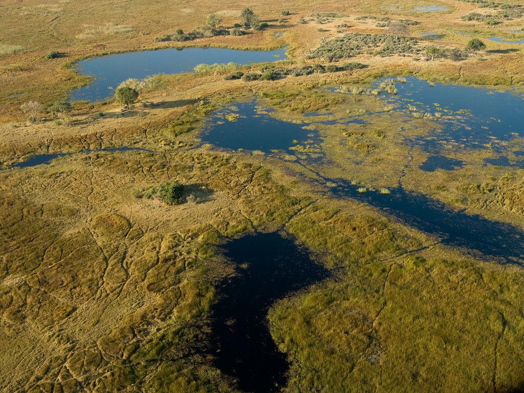 Maun – Okavango-Delta – Maun: Bootsfahrt durch das Okavango-Delta, Spaziergang auf einer abgelegenen Insel mit Picknick